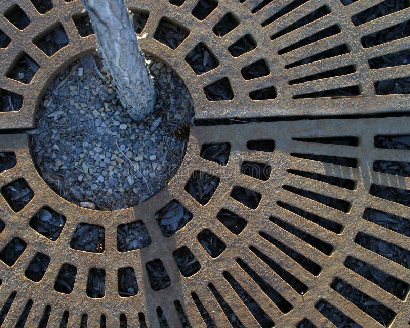 Drzewo Rusztowy Miasta. Zdjęcie Royalty Free