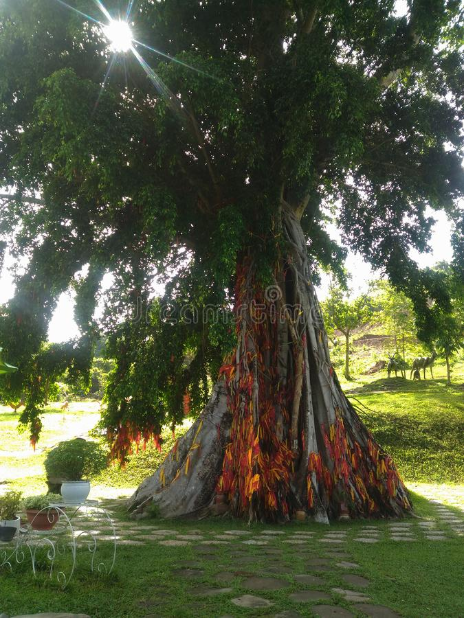 Drzewo, słońce, odgadywanie, faborek, kolor żółty, czerwień, zieleń, Wietnam, korzenie, roślina, ogród, zwrotniki, egzot, natura, fotografia stock