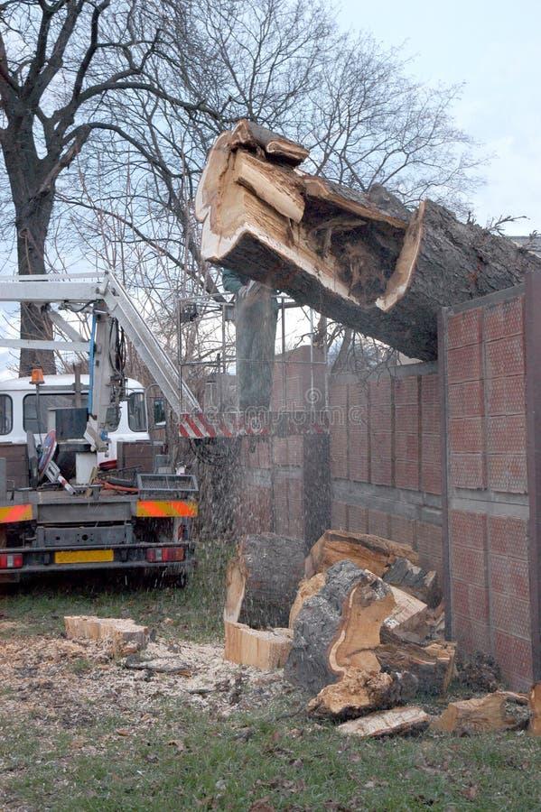 drzewo się zdjęcie royalty free