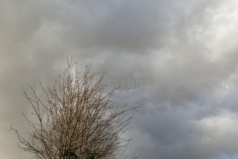 Drzewo siedzi pod chmurnym niebem zdjęcia royalty free