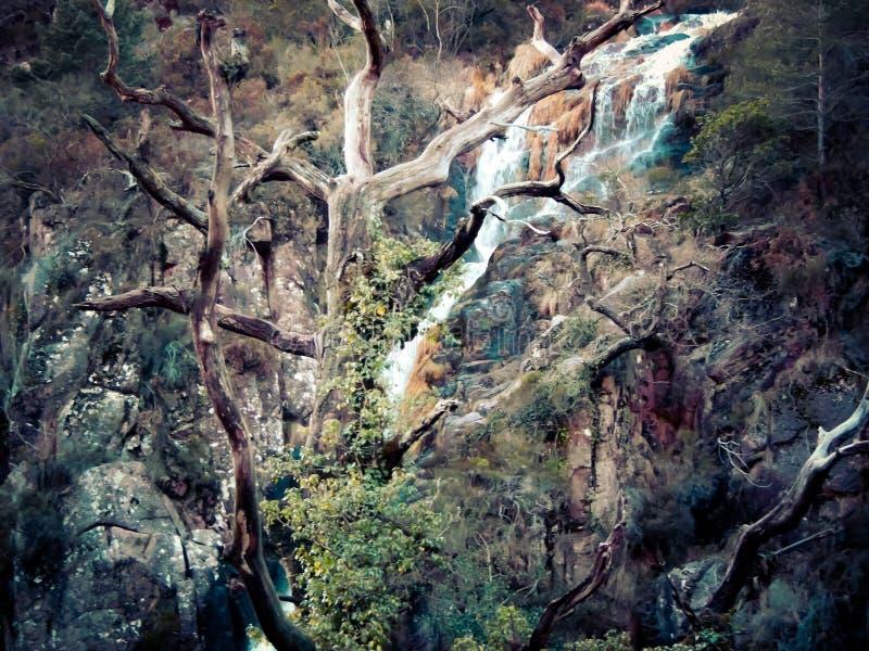 Drzewo skały fotografia stock