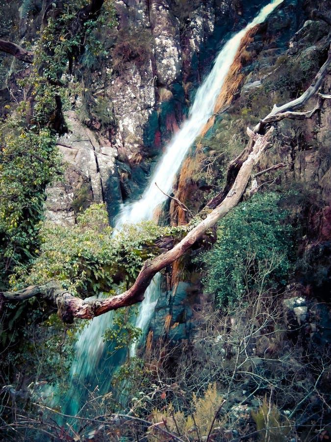 Drzewo skały obrazy stock