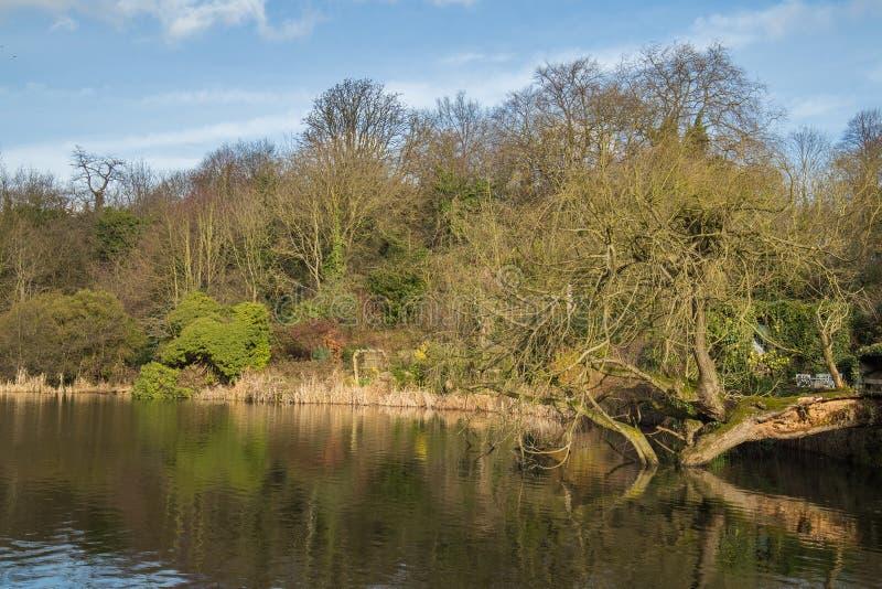 Drzewo spadać nad wodą zdjęcie royalty free
