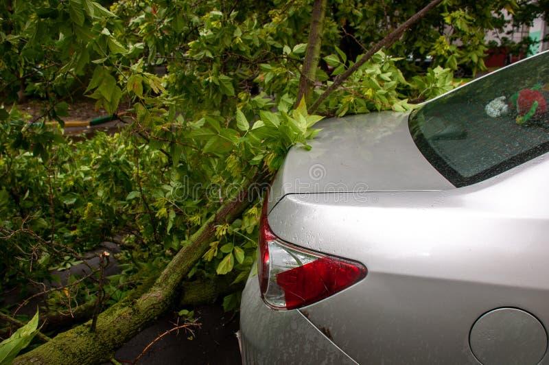 Drzewo spadał na samochodzie podczas huraganu obraz royalty free