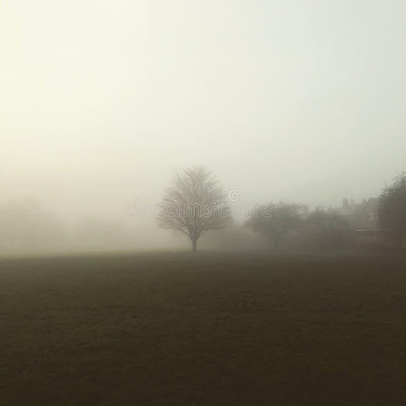 Drzewo Stoi Samotnie zdjęcia royalty free