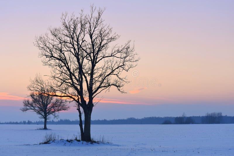 Drzewo sylwetki jasne futerkowy na czerwony słońca zachód słońca na zimę drzewa obrazy royalty free
