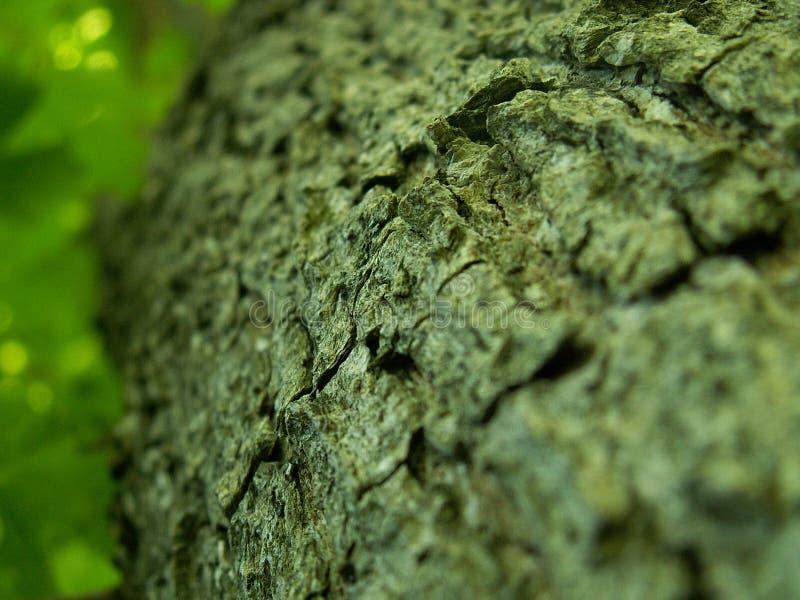 drzewo szczekać zdjęcia stock