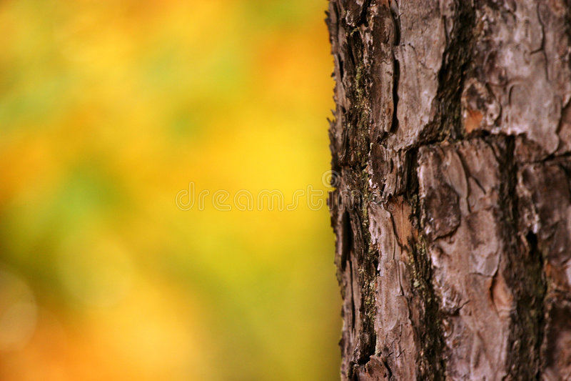 drzewo szczekać zdjęcie royalty free