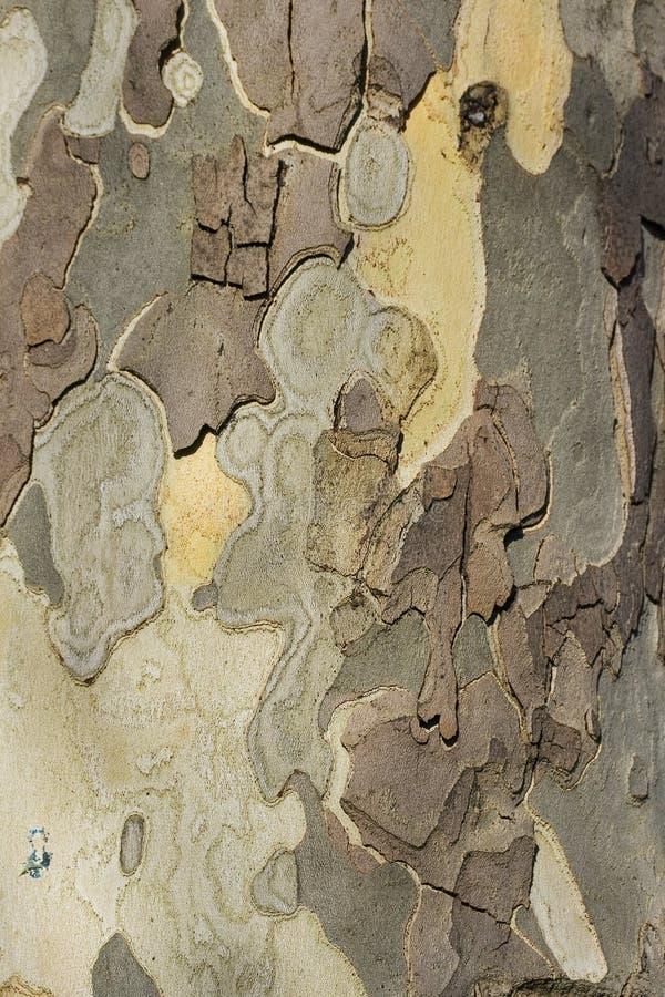 drzewo tekstury fotografia royalty free