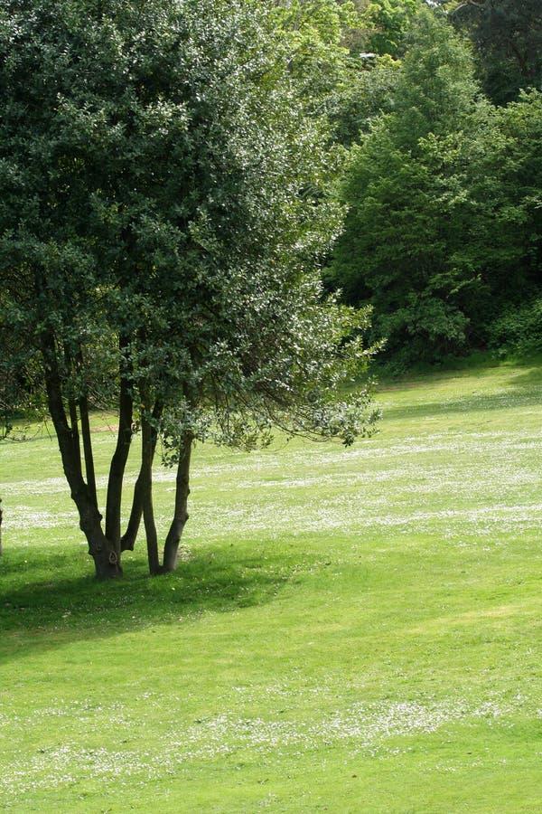 drzewo trawnika obrazy stock