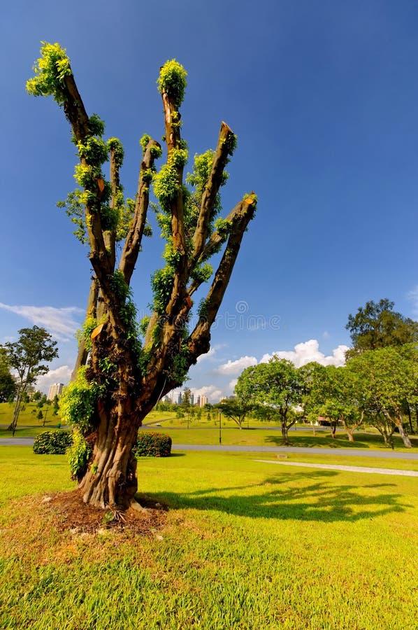 drzewo unikalny zdjęcia royalty free