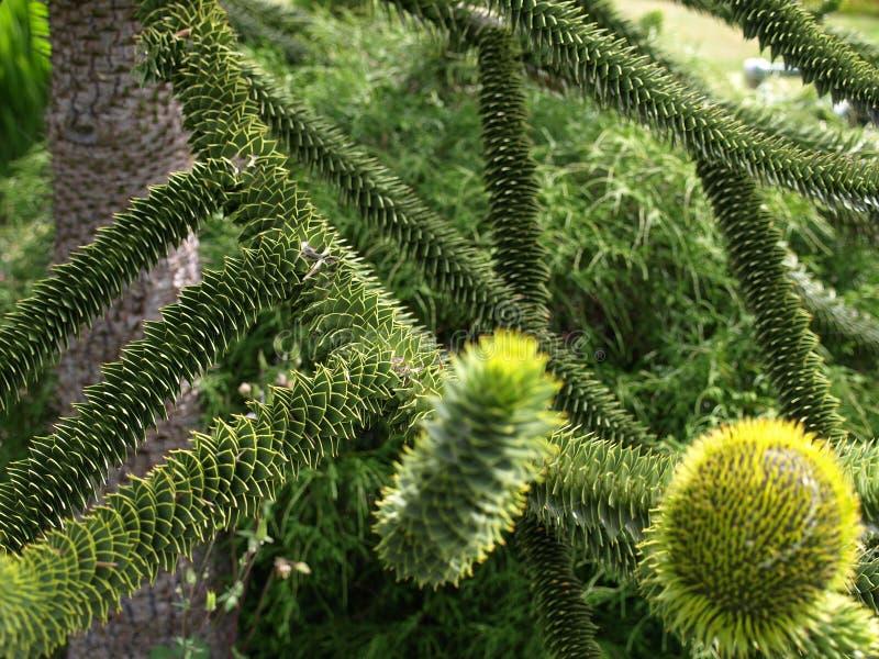 drzewo unikalny obrazy stock