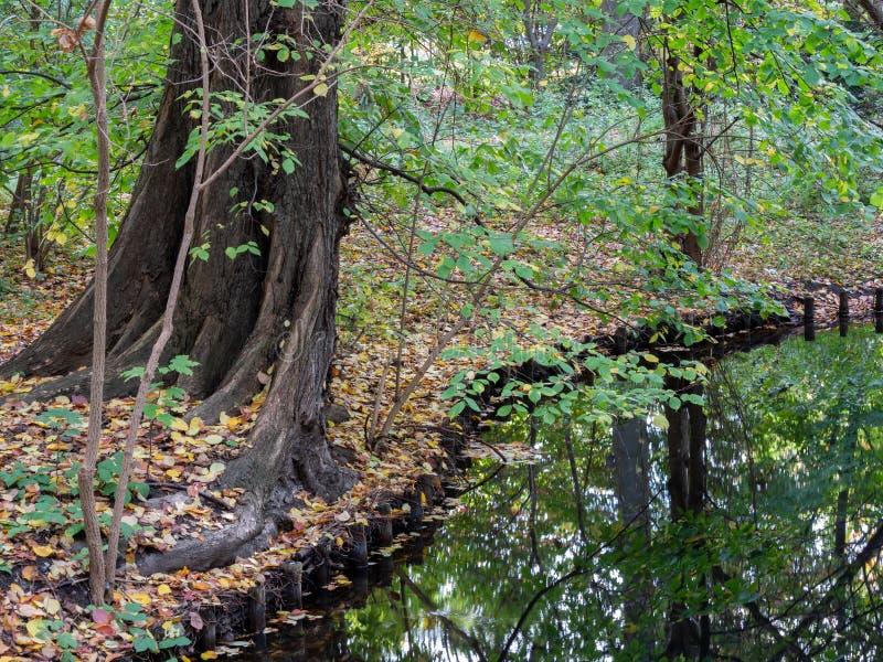 Drzewo, Upadłe Liście I Odbicia Drzew Na Lakeside Jesienią fotografia stock