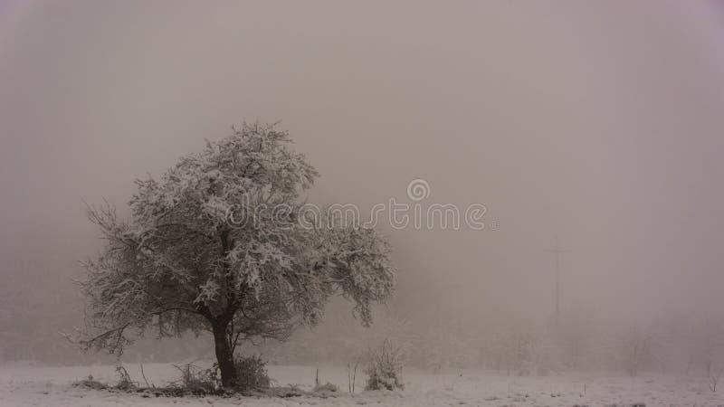 Drzewo w śnieżnym polu fotografia stock