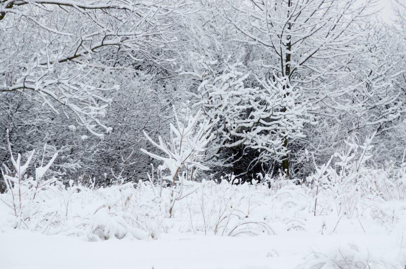 Drzewo w śniegu fotografia royalty free