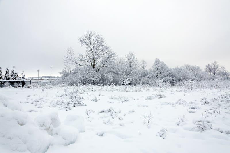 Drzewo w śniegu zdjęcia stock