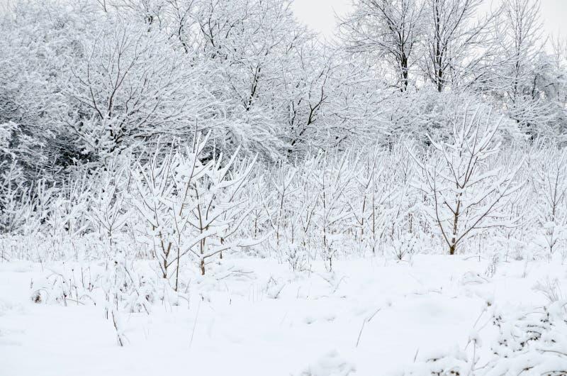 Drzewo w śniegu zdjęcie stock
