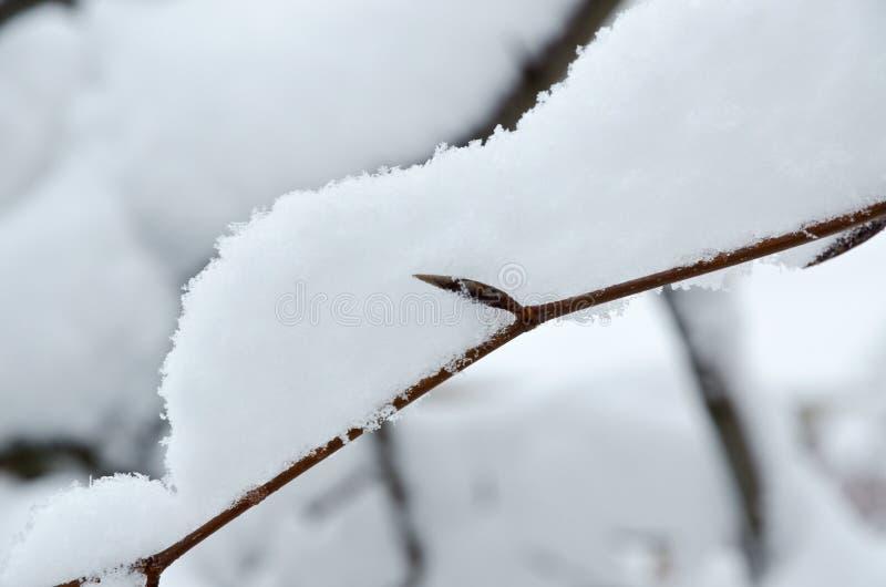 Drzewo w śniegu zdjęcie royalty free
