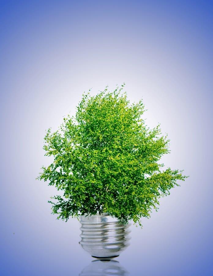Drzewo w żarówce obraz royalty free