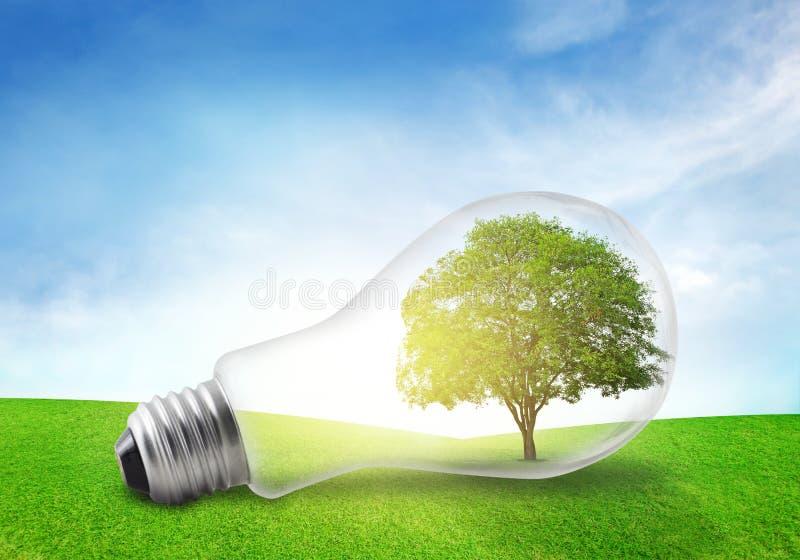 Drzewo w elektrycznej żarówce na obszarze trawiastym tła pojęcia eco energii odosobniony biel obrazy stock
