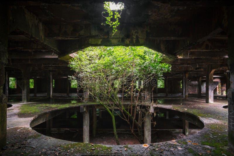 Drzewo w fabryce obraz stock