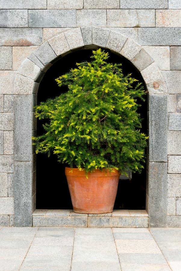 Drzewo w garnku obraz stock