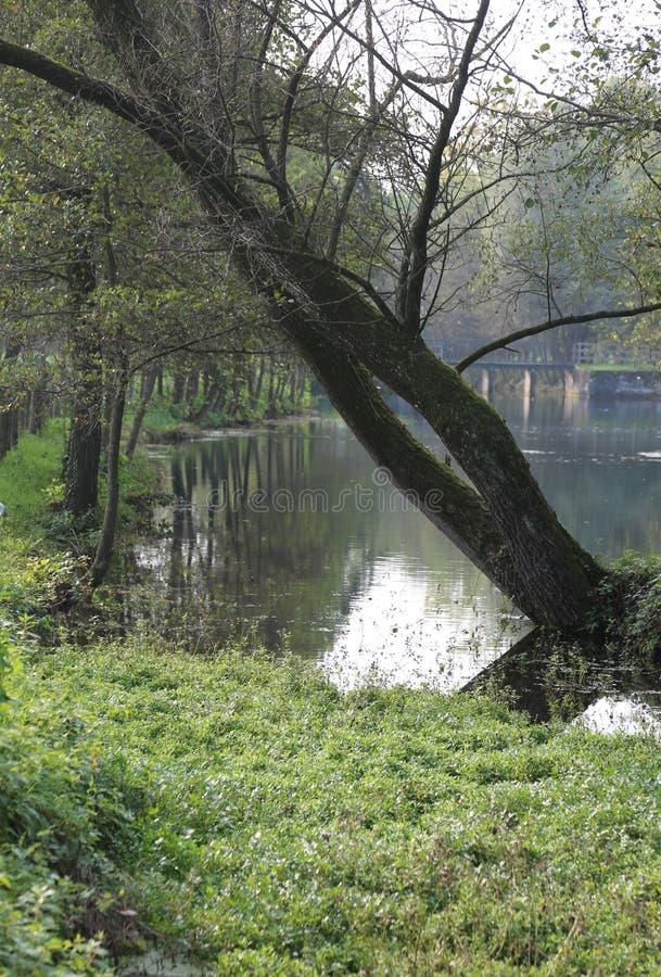 Drzewo w jawnym parku blisko źródło wody zdjęcie stock