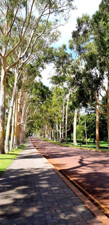 Drzewo w królewiątko parku - sposób fotografia stock