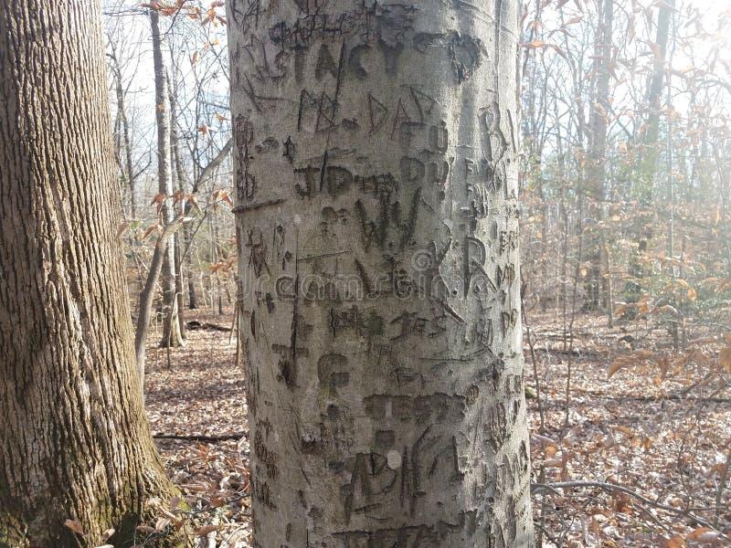 Drzewo w lesie z cyzelowaniami na barkentyny i brązu liściach obraz royalty free