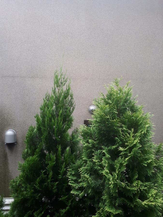 Drzewo w mój domu obrazy stock