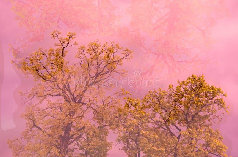 Drzewo w menchii mgle obrazy stock