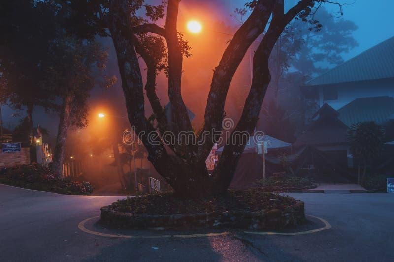 Drzewo W mgłę fotografia royalty free
