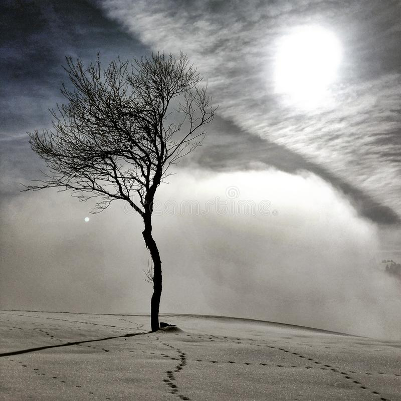 Drzewo w mgle fotografia stock