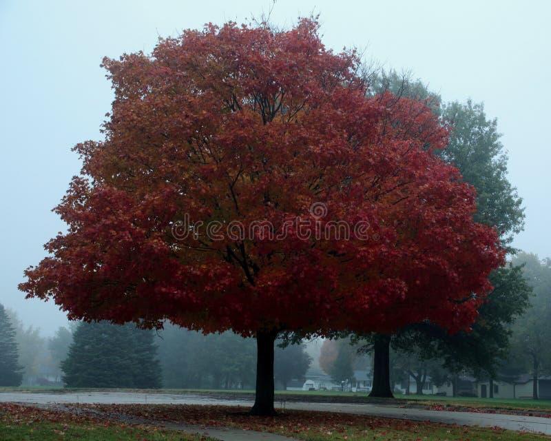 Drzewo w mgle na jesień dniu obrazy stock