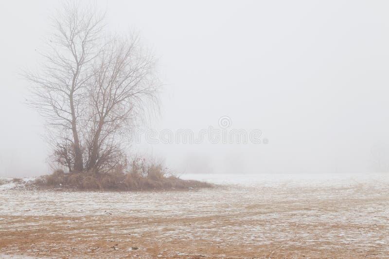 Drzewo w mgle na zimy plaży obrazy royalty free