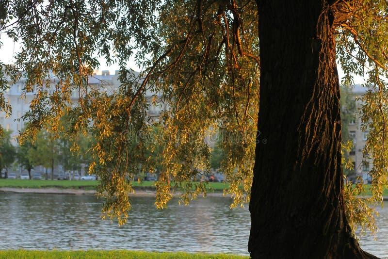 Drzewo w mieście obrazy stock