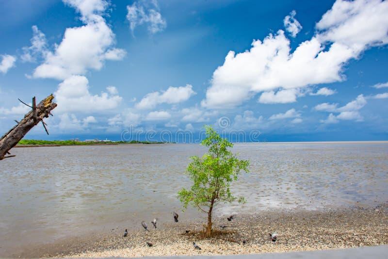 Drzewo w morzu przy uderzeniem Poo, Samut Prakan obrazy royalty free