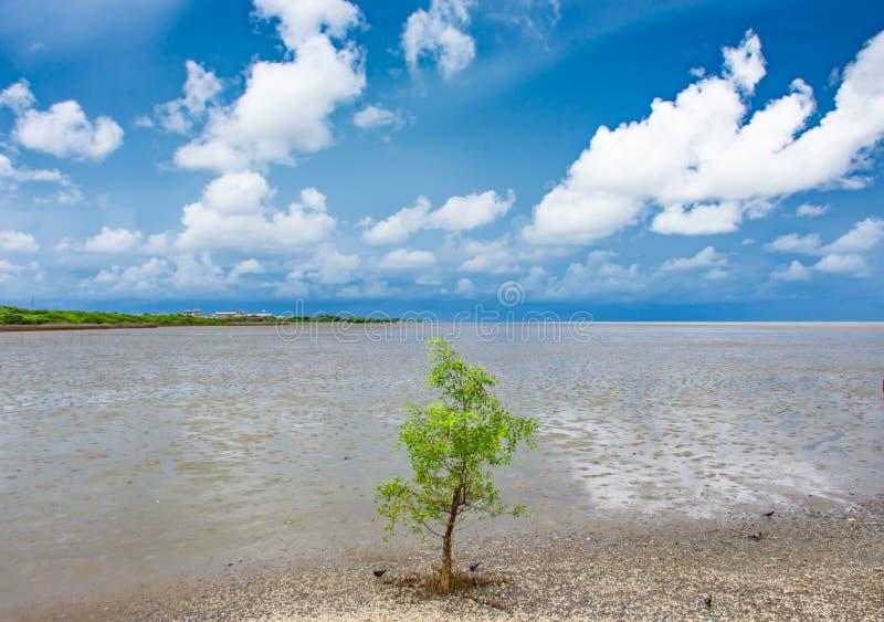 Drzewo w morzu przy uderzeniem Poo, Samut Prakan obraz stock