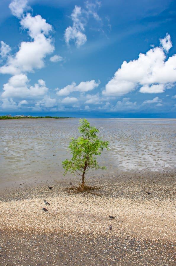 Drzewo w morzu przy uderzeniem Poo, Samut Prakan fotografia stock