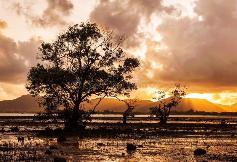 Drzewo w morzu z kolorem zmierzch i burzy chmura fotografia stock