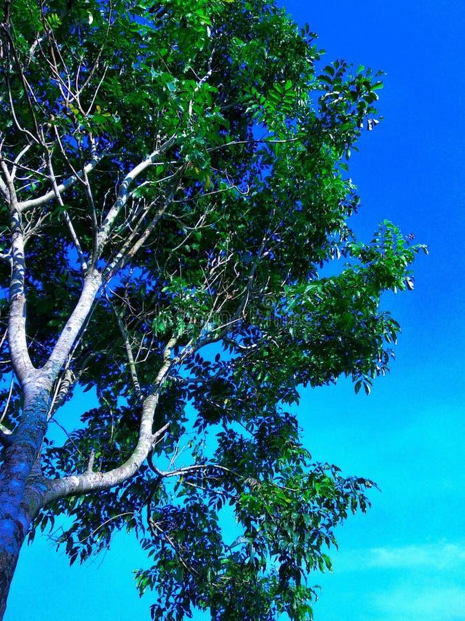 Drzewo w niebie fotografia royalty free