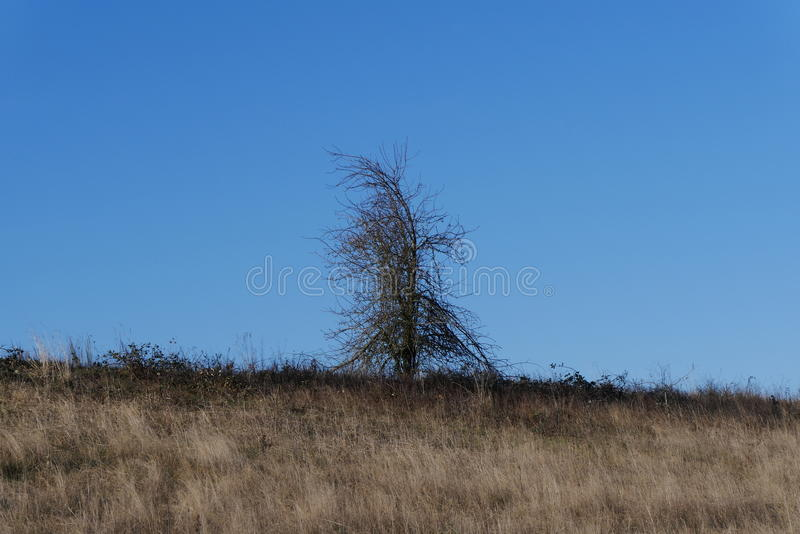 Drzewo w Oregon obrazy stock