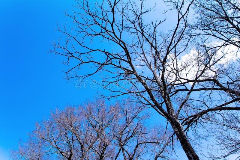 Drzewo w Oshino wiosce obraz stock