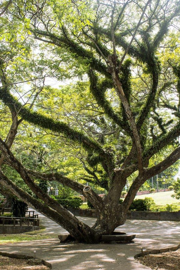 Drzewo W parku obraz royalty free