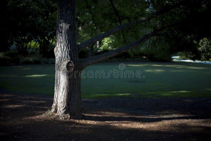 Drzewo w parku fotografia royalty free