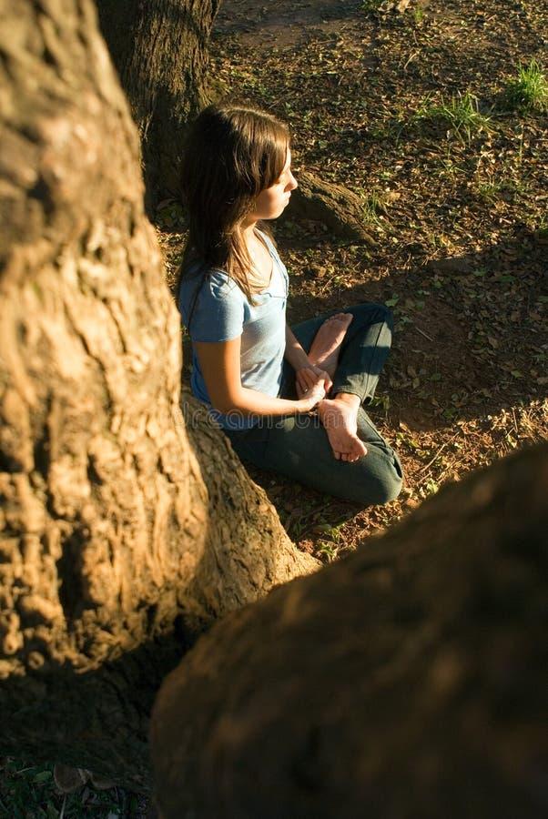 drzewo w pionowej jogi fotografia royalty free