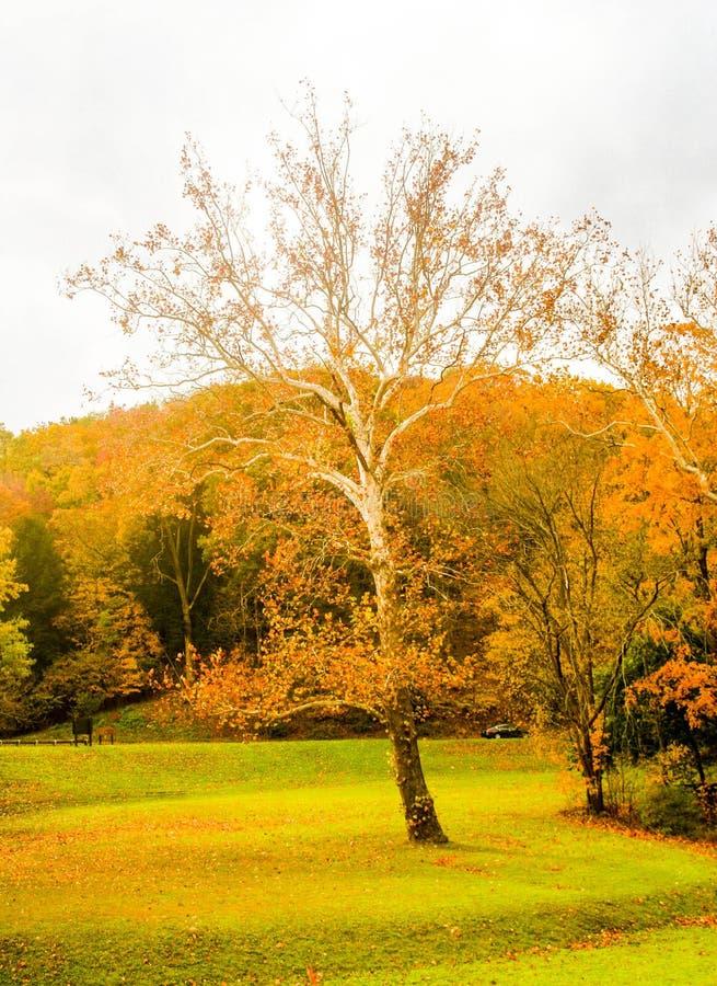 Drzewo w polu zdjęcia stock