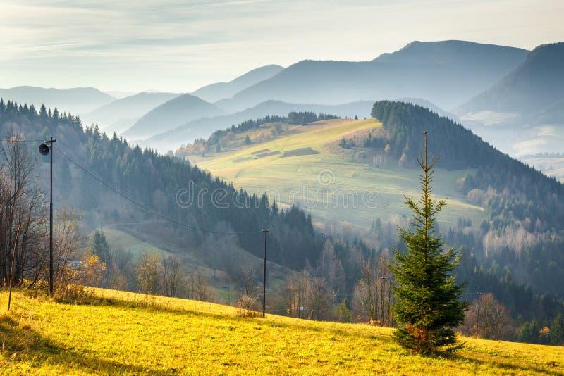 Drzewo w przedpolu jesień krajobraz z górami zdjęcie stock
