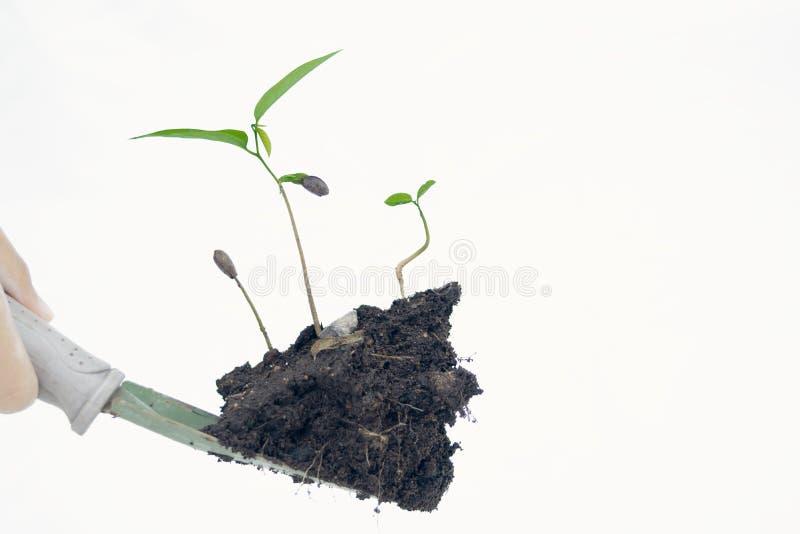 Drzewo w ręce odizolowywa na białym tle obraz royalty free