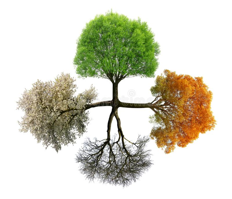 Drzewo w sezonie cztery zdjęcie royalty free